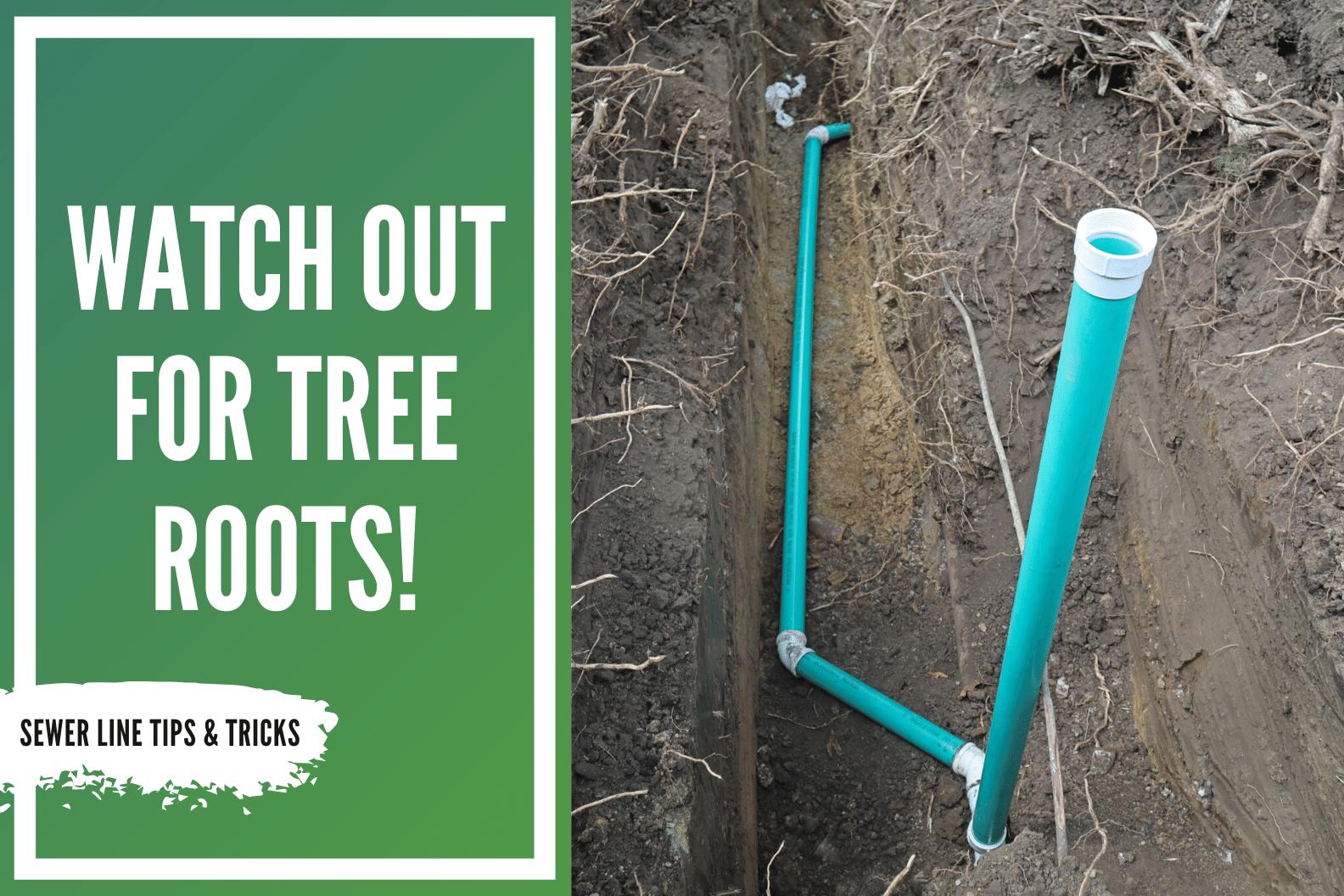 tree root blog thumbnail